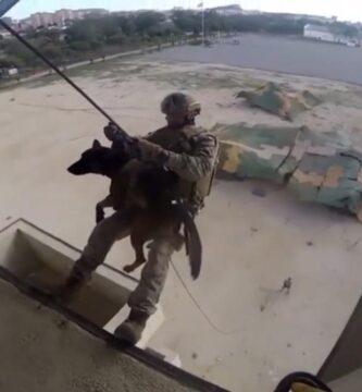 perro militar